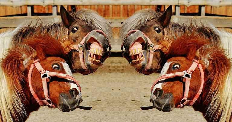 WordPress ist kein Ponyhof. Die Aufklärung eines Irrtums.